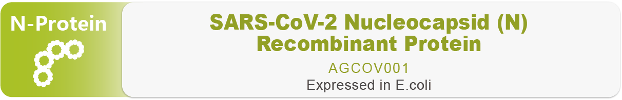 COVID-19 (SARS-CoV-2) Nucleocapsid-His Recombinant Protein